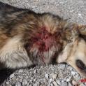 Έπνιξαν σκύλο με θηλιά στον Αμάραντο Κόνιτσας