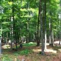 Τι έγινε με τη διαχείριση του δημοτικού δάσους Πάδων Κόνιτσας;