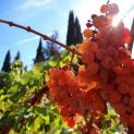 Επίσκεψη 30 Ιταλών επαγγελματιών του κρασιού
