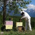 Δωρεάν Σεμινάριο μελισσοκομίας από τη Δημόσια Κεντρική Βιβλιοθήκη Κόνιτσας