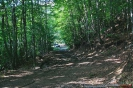 Δάσος με Οξυές