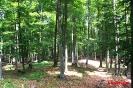 Δάσος Οξυάς στον Γράμμο